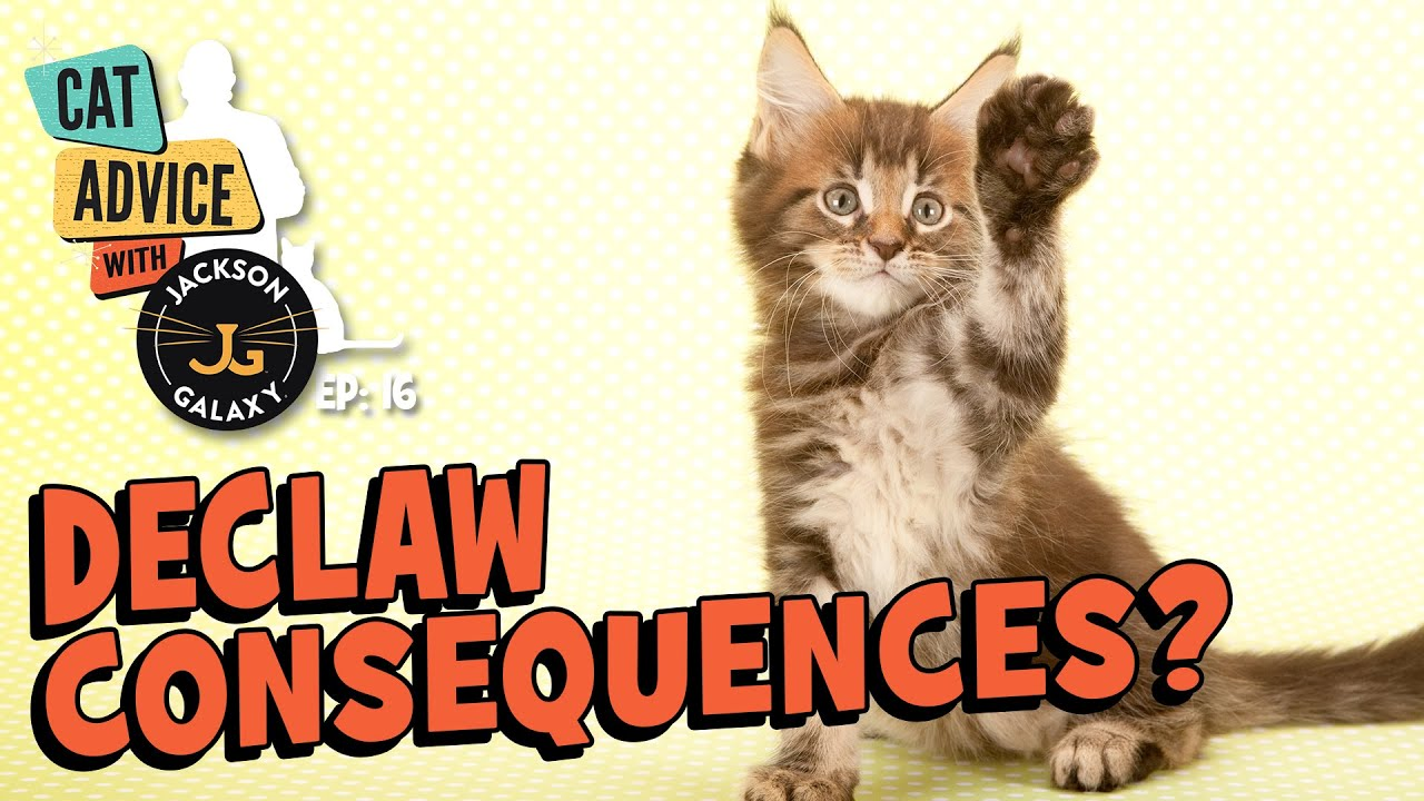 Declawed Cats: Playtime & Other Challenges