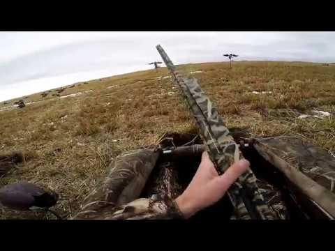 2016 Saskatchewan Goose Hunting Trip