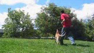 Dog Training School - Sit Means Sit Dog Training Franchise