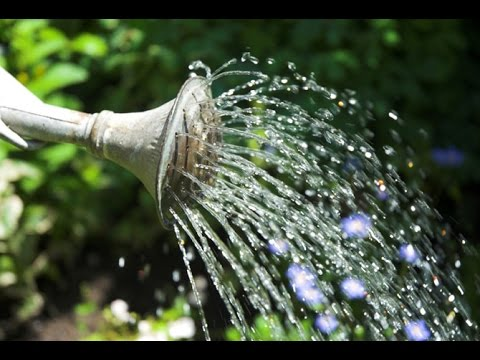 Over-watering your garden plants - a common mistake