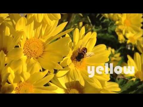 idiomium — los colores en inglés