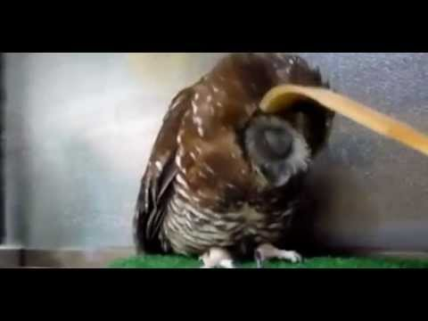Owl Only Wants Head Scratched