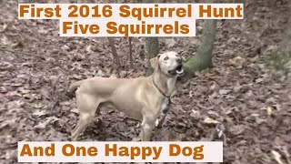First 2016 Squirrel Hunt: Five squirrels and one Happy Dog.