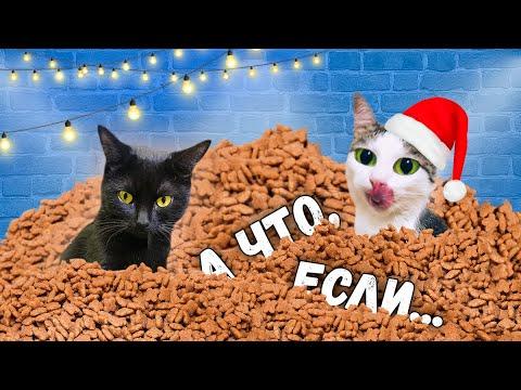 Что, если поставить коту огромный мешок его любимого корма? Ремонт и приколы с животными / SANI vlog