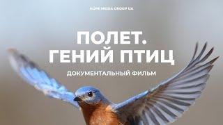 Полет: гений птиц. Документальный фильм | Мифы эволюции