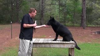 So you want a Protection Dog...German Shepherd Man explains