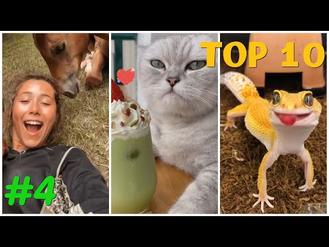 NEW 🔥 Cute & Funny Animal Videos 🤣 Cats, Dogs & other pets  (Compilation #4) – try not to laugh