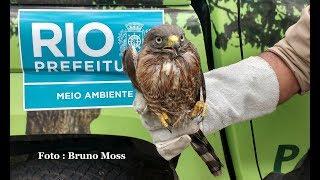 Resgate de Animais Selvagens - Verde Moss Ambiental