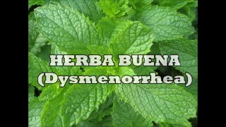 Herbs for Life: HERBA BUENA (Dysmenorrhea)