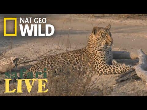Safari Live - Day 8 | Nat Geo WILD