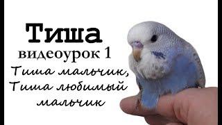 """Учим попугая Тиша говорить. Видеоурок 1: """"Тиша мальчик, Тиша любимый мальчик!"""""""