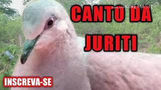 Download Mp3 O Canto Da Juriti