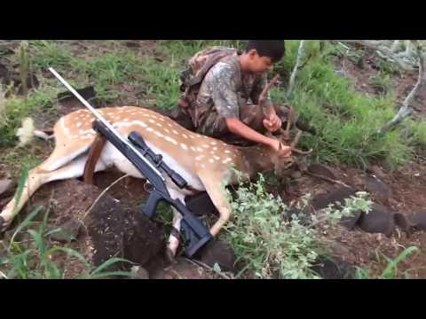 RIFLE HUNTING AXIS BUCKS ON MOLOKAI