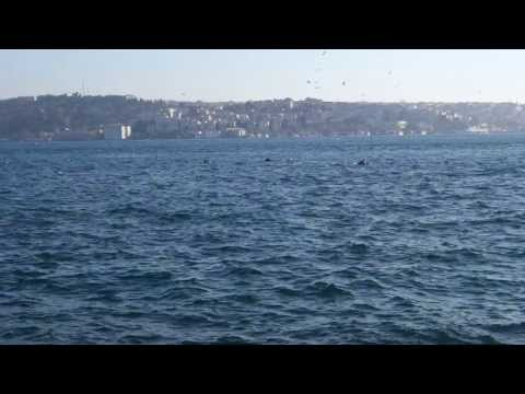 2013/12/20 Dolphins in Bosphorus Channel