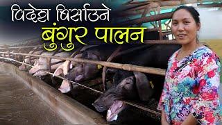 बुंगुरको व्यापार, लाखौंको कारोबार :  यस्तो छ नेपालकै अत्याधूनिक बुंगुर फार्म | Pig Farming in Nepal
