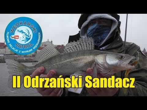 II Odrzański Sandacz- Szczecin 2017