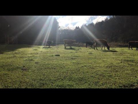 views-around-the-farm-!-|-vlog---the-mac's