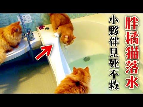 橘貓「腳滑掉進水裡」...牠的兄弟竟見死不救,當場落跑~