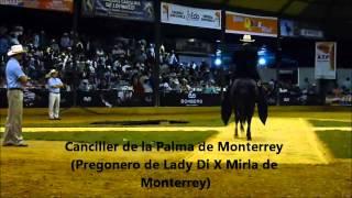 Rumor de la Tinaja primer puesto caballos categoría mayores de 78 meses Copa america equina 2013.