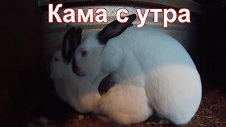Кролики. Камасутра !