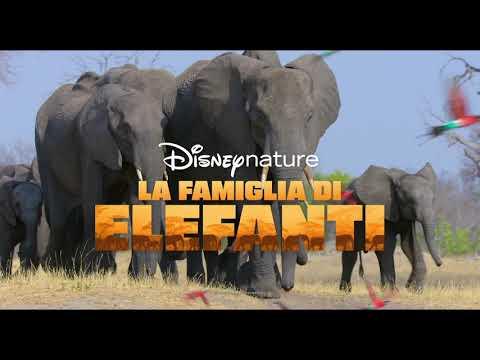Disneynature: La Famiglia di Elefanti e Echo, Il Delfino | Disney+ | In Streaming dal 3 Aprile