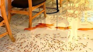 Tysiące Ryb Pływa Pod Tobą! Niesamowite Restauracje