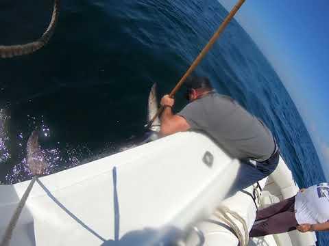 Harpoon Swordfishing Part 2 Boating The Fish