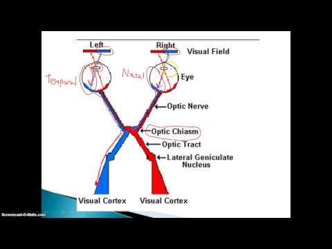 Visual Nerve Pathways