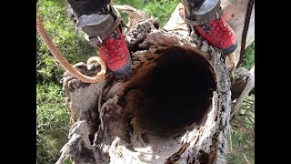 Dangerous Hollow Tree Removal