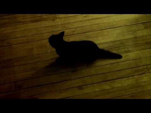 Kitten experiencing a bad cluster seizure. Details below.