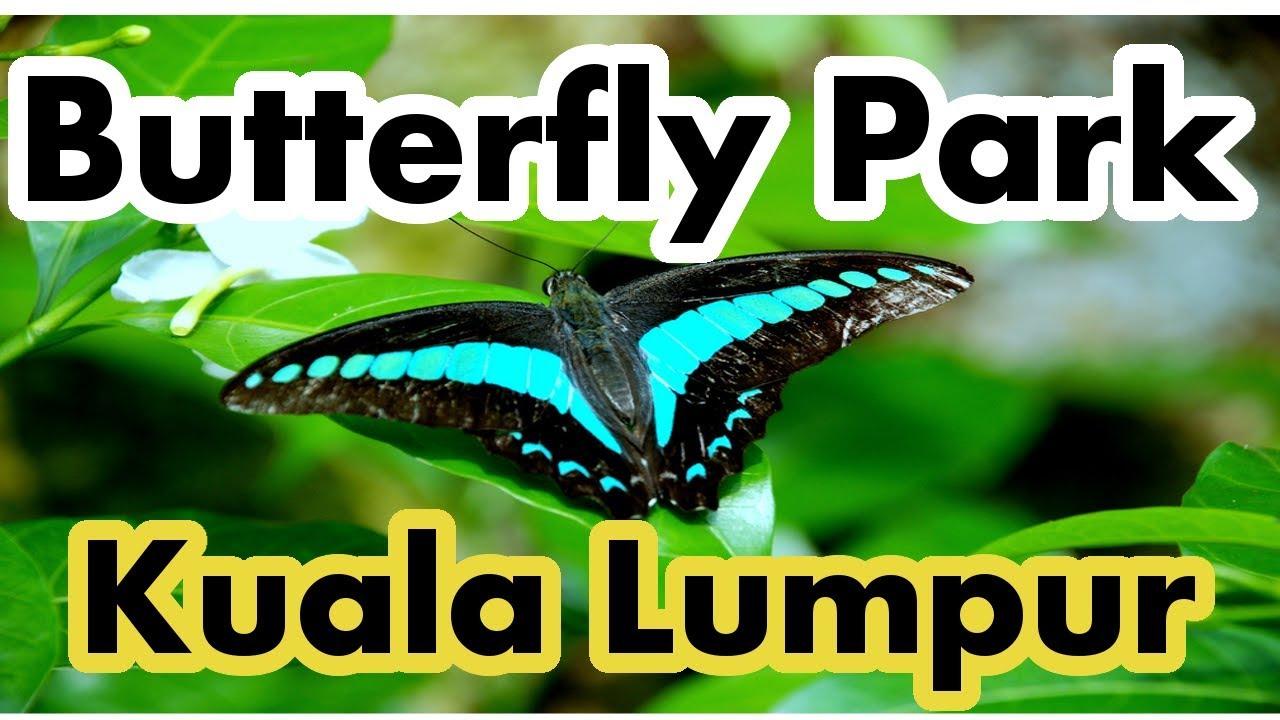 Kuala Lumpur Butterfly Park Malaysia Youtube Tiket Insect Kingdom