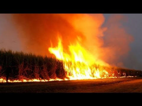 GMO Crops Burning, Halliburton Fined For Gulf Spill and Conspiracy News