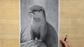 Charcoal Pencil Drawing of an Otter - Animal Drawing