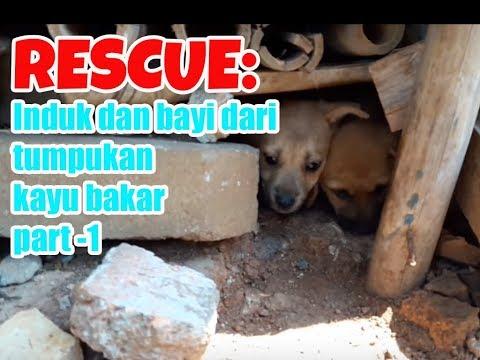 RESCUE: Induk dan 6 bayi dari bawah tumpukan kayu bakar - Part 1