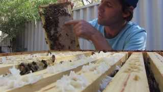Langstroth Hive Inspection. Checking The Honey Stores.
