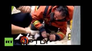 Испанский пожарный спас щенка, сделав ему искусственное дыхание