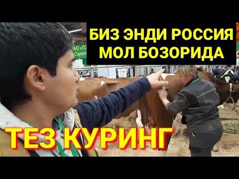 УЗБЕКЛАР РОССИЯ МОЛ БОЗОРИДА
