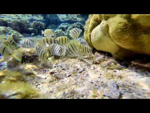 11 - 28 - 14 Hawaii Tide Pool & Fish - GoPro Hero 3+ x