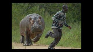 Хищники убийцы Африки Документальный фильм Серия 1