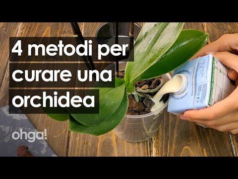 Download Come curare una pianta di orchidea: 4 metodi infallibili per i fiori e le foglie