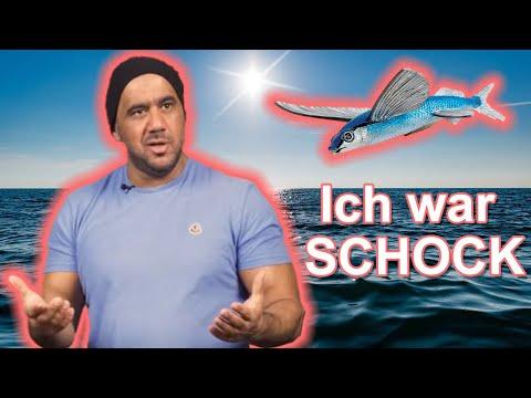 Deutsche Memes... ARAFAT sieht fliegende Fische!