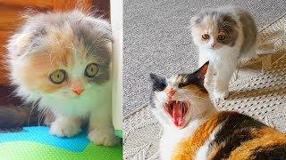 Маленький котенок ПРОТИВ большой кошки! Почему кошка не хочет дружить с котенком? 0+