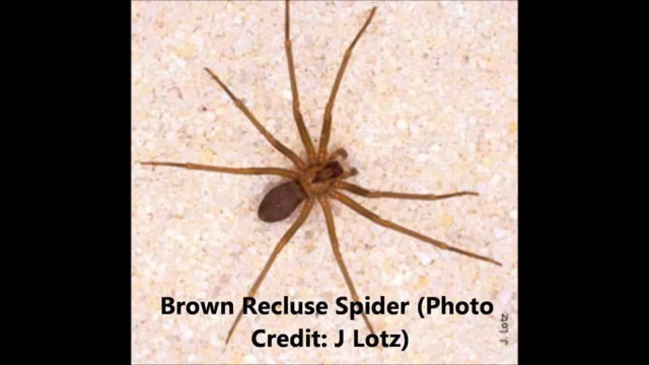 Spider Control Florida Reynolds Pest Management Inc Doovi