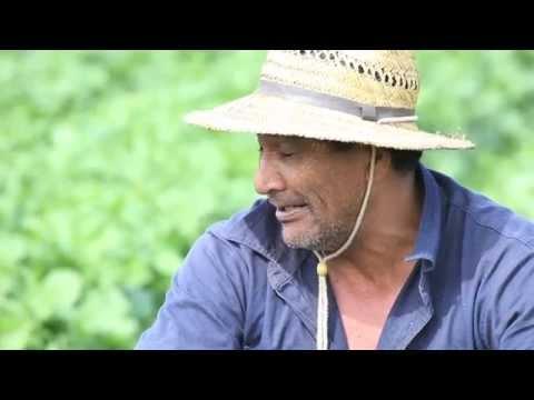 Maori TV, Native Affairs, Puha Patch, Lockeyer Valley QLD