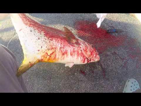 THIS IS WHY I LOVE BRIDGE FISHING , FLORIDA KEYS, BRIDGE FISHING