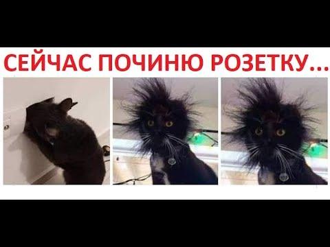 видео: Лютые приколы. Кот электрик