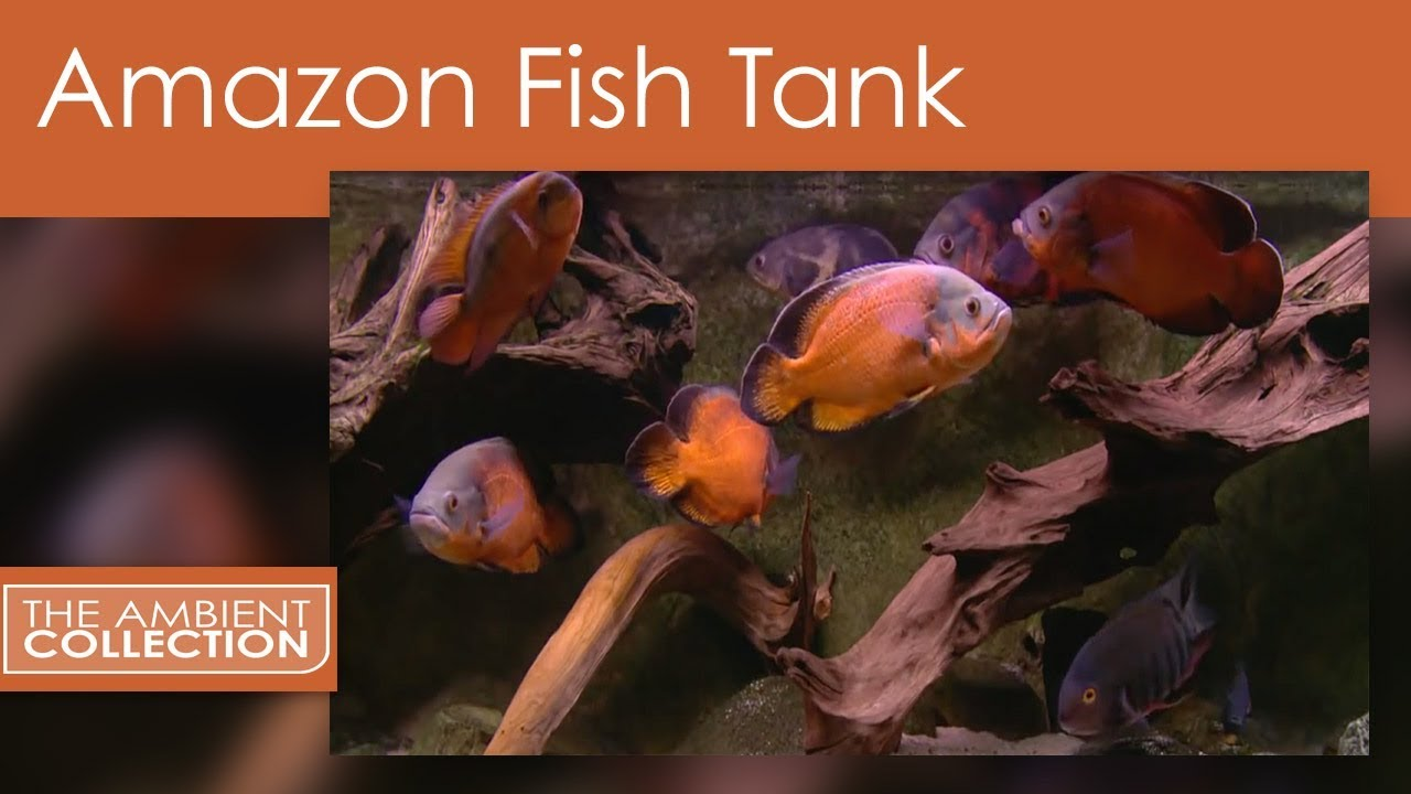 Amazon fish tank dvd relax with a amazon aquarium with for Amazon fish tanks