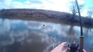 Трофейный лещ пойманный на фидер, Весна 2015г