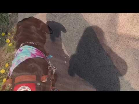 SERVICE DOG GOES TO COLLEGE | Day in the life.