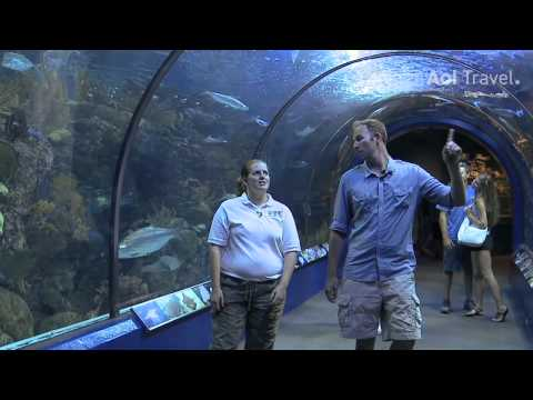 AOL Travel: How to Tour the Aquarium of the Americas in New Orleans
